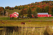 Vermont farm in the fall. USA, Vermont. RELEASE AVAILABLE. by Danita Delimont