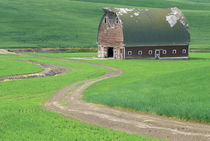 N.A., USA, Washington, Whitman County.  Old weathered barn in wheatfield.  PR by Danita Delimont