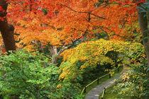 Okochi Sanso, Arashiyama, Kyoto, Japan von Danita Delimont