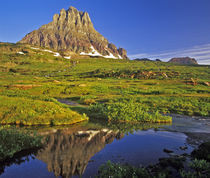 Mt Clements reflects into small pool at Logan Pass in National Park, Montana by Danita Delimont