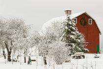 North America, USA, WA, Whidbey Island.  Festive red barn in fresh snow von Danita Delimont