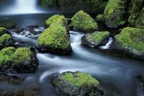 N.A., USA, Oregon by Danita Delimont