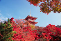 Asia, Japan, Kyoto. Autumn Colour by Danita Delimont