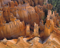 USA, Utah, Bryce Canyon NP by Danita Delimont