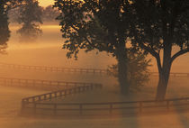 NA, USA, Kentucky Foggy sunrise on Kentucky horse farms by Danita Delimont