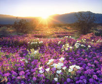 USA, California, Anza-Borrego Desert State Park by Danita Delimont