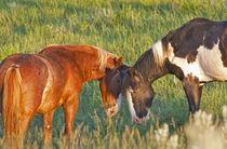 Wild Horses at Theodore Roosevelt National Park in North Dakota von Danita Delimont