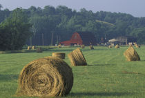 NA, USA, Kentucky, Greenup Hay bales and red barn by Danita Delimont