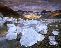 USA, Alaska, Glacier Bay NP von Danita Delimont