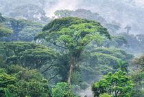 Monte Verde Reserve, Costa Rica von Danita Delimont