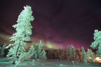 The Aurora borealis is a phenomenon of light von Danita Delimont