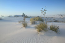 USA-NEW MEXICO- White Sands National Monument von Danita Delimont