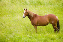 North America,USA,Washington,Horse in Spring Field,Palouse Country Washington by Danita Delimont