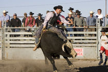 Bull Riding at North American Indian Days in Browning, Montana by Danita Delimont