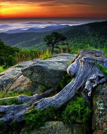 USA, Virginia, Shenandoah National Park by Danita Delimont