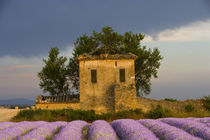 Europe, France, Provence by Danita Delimont