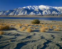 NEVADA. USA. Dunes & tumbleweeds by Danita Delimont