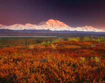 USA, Alaska, Denali NP, Sunset light on Mt McKinley by Danita Delimont