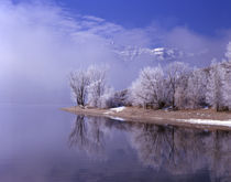 Rimed trees and reflection, Mt. Timpanogas above the clouds, Utah. by Danita Delimont
