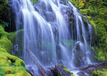 Spring-time fresh water flowing over moss carpeted rocks Proxy Falls von Danita Delimont