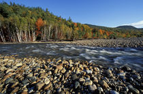 A cobble beach on the Saco River in New Hampshire's White Mountains by Danita Delimont