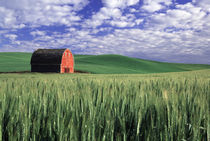 Red barn in wheat & barley field in Whitman County, Washington state  PR by Danita Delimont