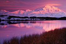 Mt. Denali at sunset from Reflection Pond by Danita Delimont