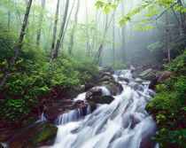 Linn Cove Creek cascading through foggy forest von Danita Delimont