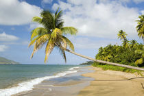 Coconut Grove Beach at Cades Bay, with St. Kitts on horizon von Danita Delimont