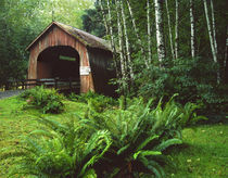 USA, Oregon, North Fork Yachats River covered bridge in Siuslaw National Forest by Danita Delimont