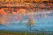 USA, West Virginia, Davis. Misty valley and forest in autumn colors. Credit as von Danita Delimont