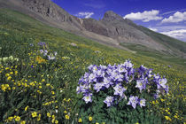 Mountains and wildflowers in alpine meadow von Danita Delimont