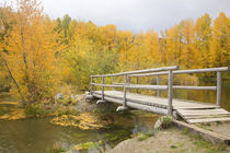 WA, Wenatchee NF, near Easton, Autumn color at Easton Ponds with trail by Danita Delimont