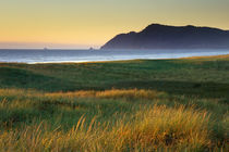 Grass waving in the wind at the coast near Gearhart, Oregon. von Danita Delimont