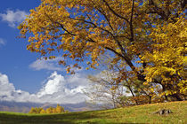Single tree and distant southern Appalachian Mountains in fall, North Carolina by Danita Delimont