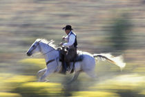 NA, USA, Oregon, Seneca, Ponderosa Ranch Cowboy riding in sage  MR PR von Danita Delimont