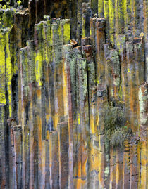 USA, Oregon, Umpqua National Forest by Danita Delimont