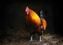 Red rooster by Susan Isakson