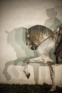 Andalusier Lucas - Christiane Slawik by Christiane Slawik