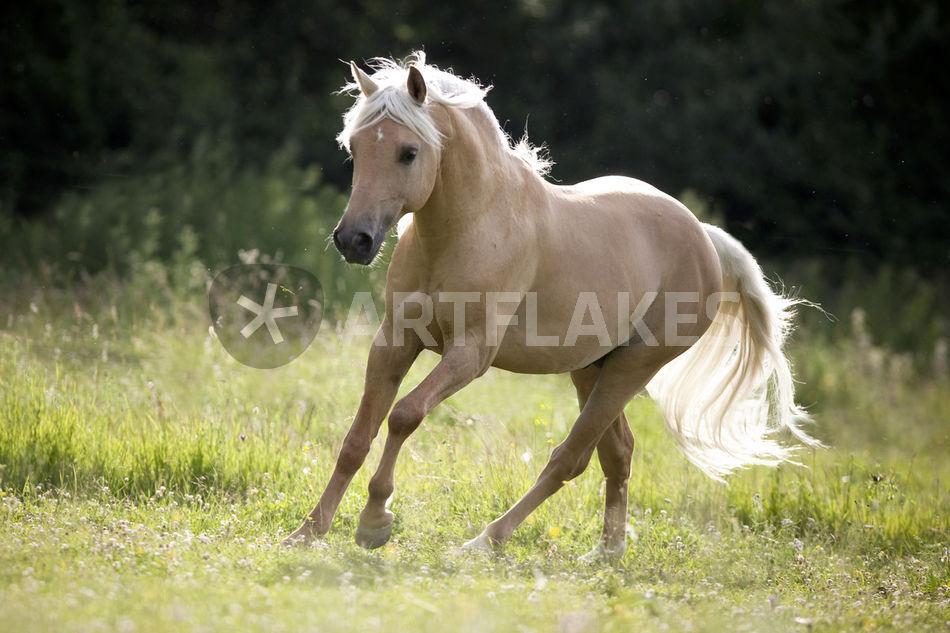 Quarter horse brands search