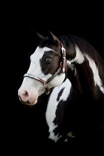 Paint Horse - Christiane Slawik by Christiane Slawik