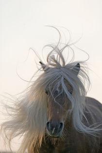 Classic Pony - Christiane Slawik by Christiane Slawik