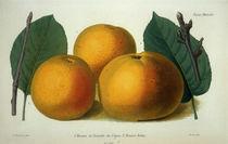 Apfel/Pomme de Reinette/Robin/Farblitho von AKG  Images