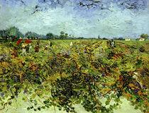 V.van Gogh, Der gruene Weingarten by AKG  Images