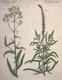 Waid und Wau / Bertuch 1796 von AKG  Images