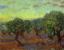 Van Gogh, Olivenhain by AKG  Images
