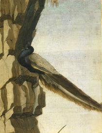 S.Botticelli, Pfau von AKG  Images