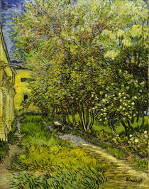 V.van Gogh, Garten Hospital St.Remy by AKG  Images