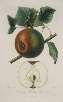 Apfel/Pomme Verdin d'hiver/Radierung by AKG  Images