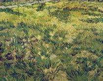V.van Gogh, Wiese im Garten d.Hospitals von AKG  Images